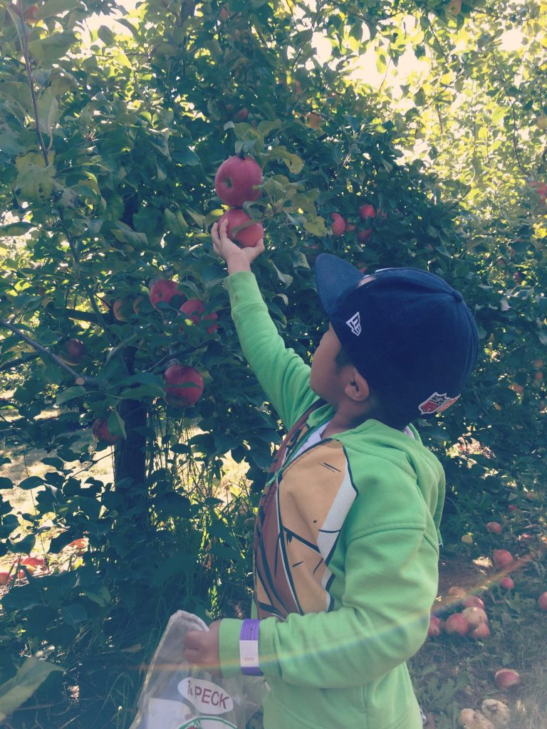 Family Fun Review of All Seasons Orchard in Woodstock, Illinois. The best apple picking, apple cider donuts, and hand-dipped caramel apples.
