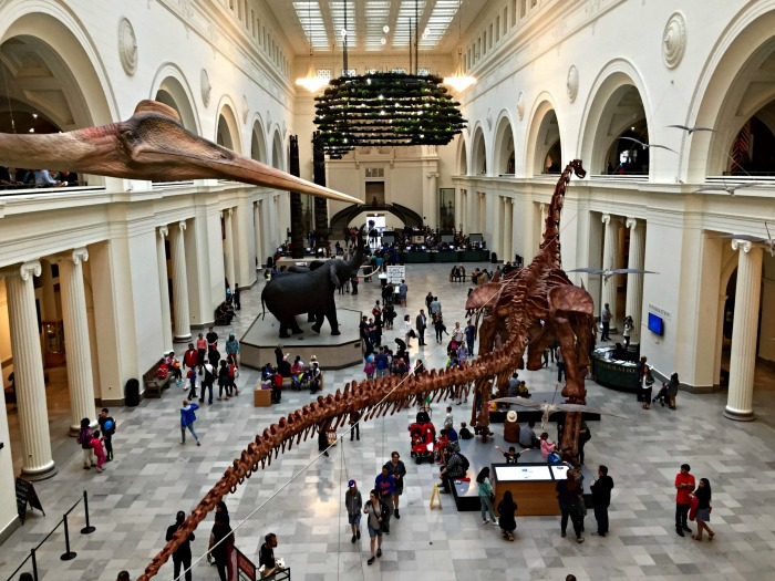Meet Máximo, the Titanosaur, at The Field Museum in Chicago