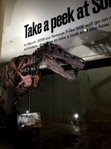 There's a new dinosaur in town. Meet Maximio, the Titanosaur, at the Field Museum of Natural History in Chicago.