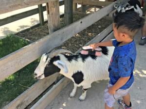 Family fun at Randall Oaks Zoo and Secret Park.