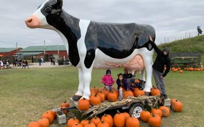 Pumpkin Fest at Siegel's Cottonwood Farm