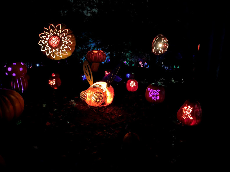 Jack's Pumpkin Glow has made a stop in Chicago! Read all about our illuminating experience as well as tips to enjoy your time!