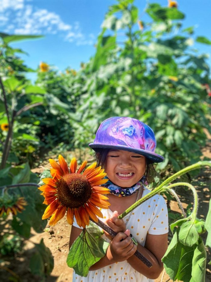 Go through a sunflower maze at Goebbert's Pumpkin Patch in Pingree Grove. Cut your own sunflower to take home!