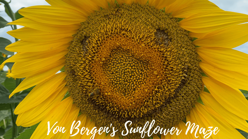 Our experience revisiting Von Bergen's Sunflower Maze in Hebron, Illinois including food from Crandall's Restaurant and Hazel's, farm animals, a play area.