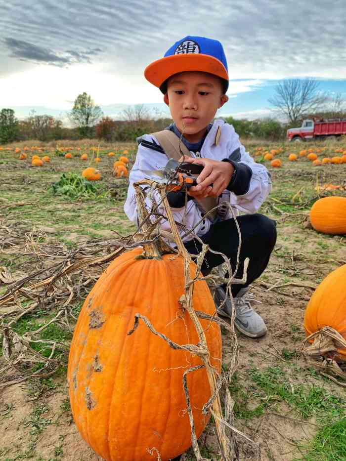 Pumpkin picking at Enjoy Pioneer Farm in Hampshire. The no-frills farm lets you pick pumpkins and from the field and see farm animals.