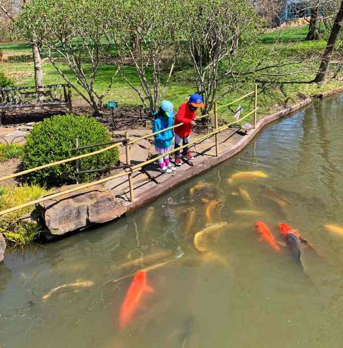Family fun at Missouri Botanical Garden including a tropical rainforest and a Japanese strolling garden. Kids love feeding koi fish!