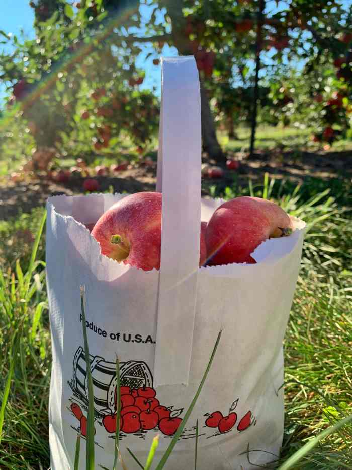 Fall Family Favorites at All Seasons Orchard in McHenry County