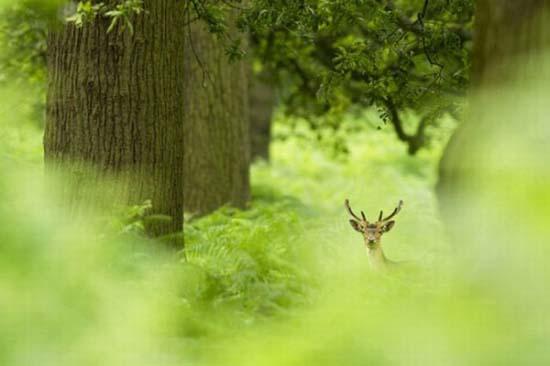 Οι κορυφαίες φωτογραφίες άγριας φύσης για το 2011 (15)