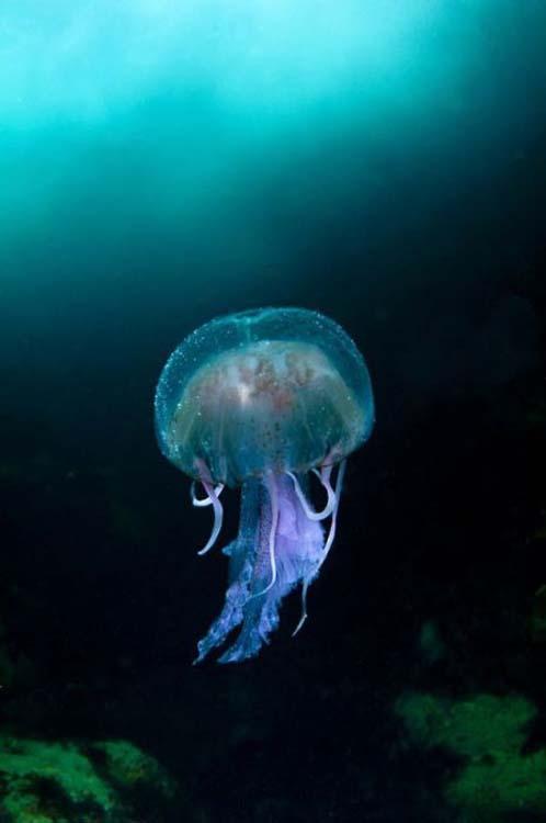 Οι κορυφαίες φωτογραφίες άγριας φύσης για το 2011 (19)