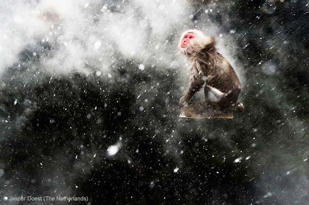 Wildlife Photographer of the Year 2013 (20)