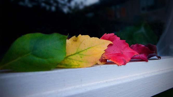 Όλο το χρωματικό φάσμα του Φθινοπώρου σε εντυπωσιακές φωτογραφίες (6)