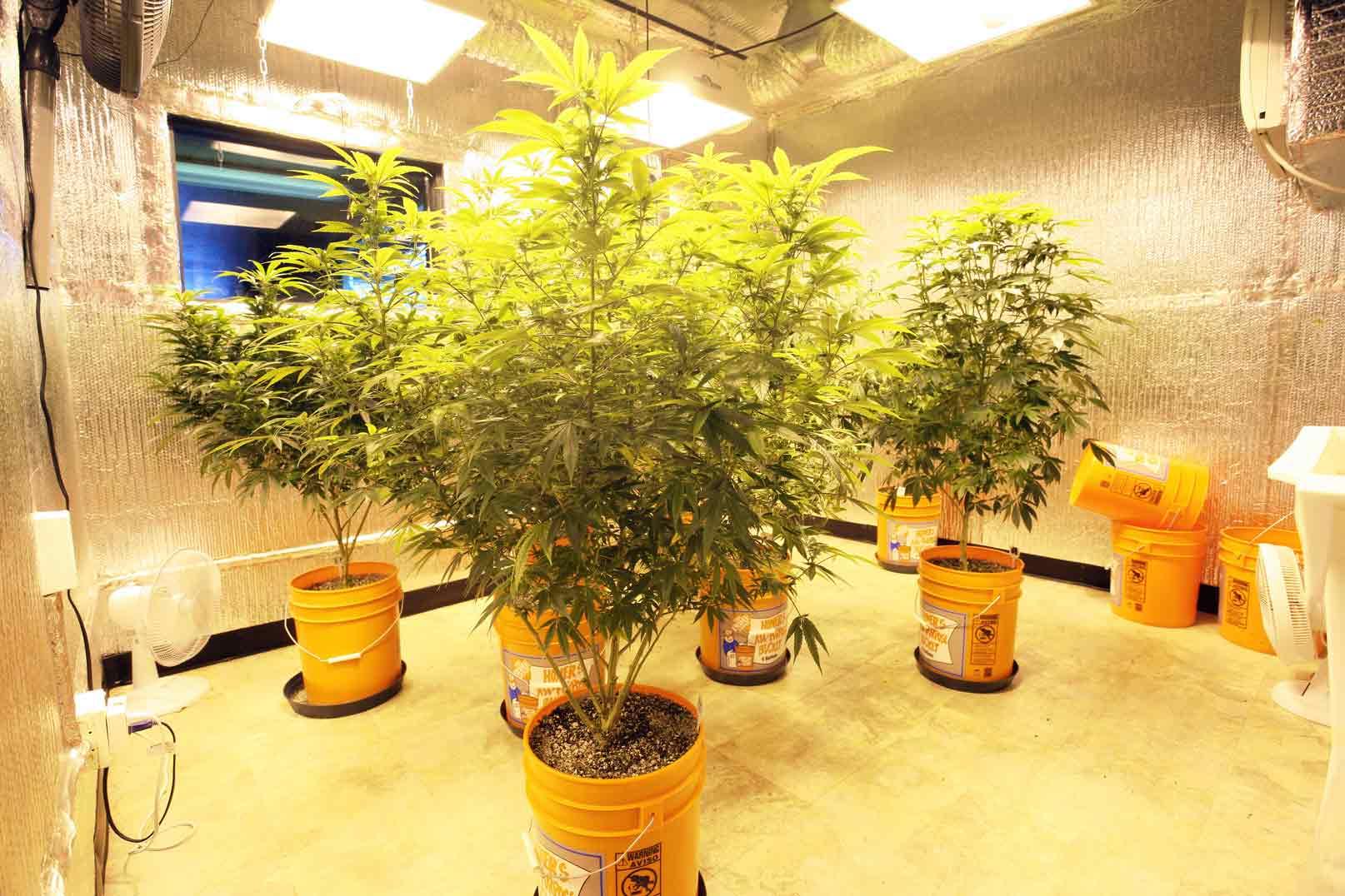 hight resolution of growroom
