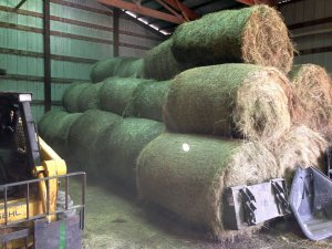 Hay in shed