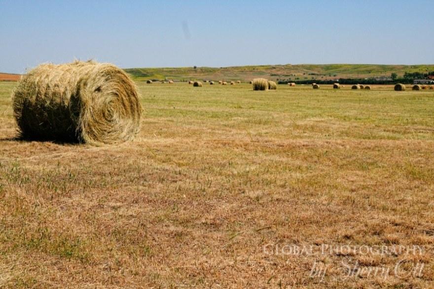 south dakota hay