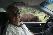 south dakota buffalo7