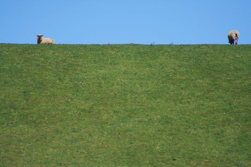 Land of Sheep