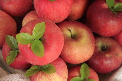 apples:  tao