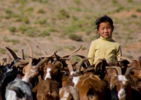 Among Goats