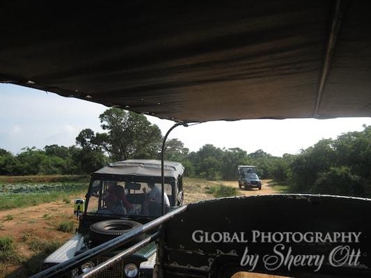 yala safari sri Lanka
