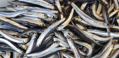 porta nolana naples fish market
