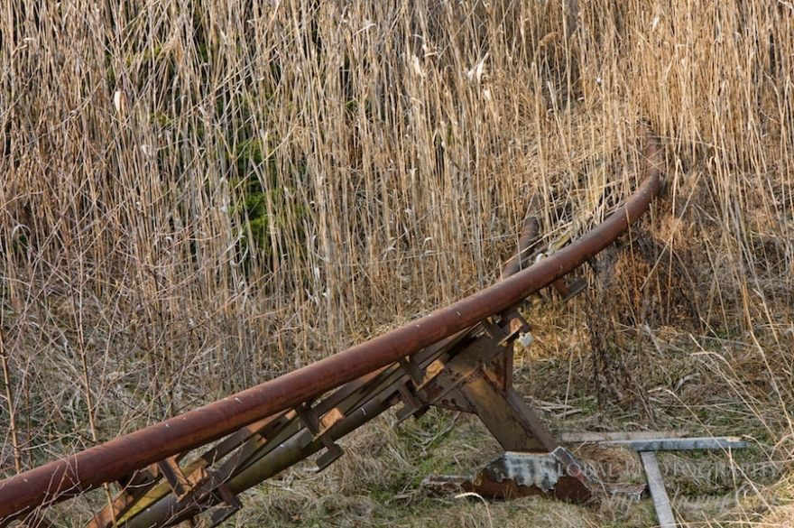 roller coaster weeds