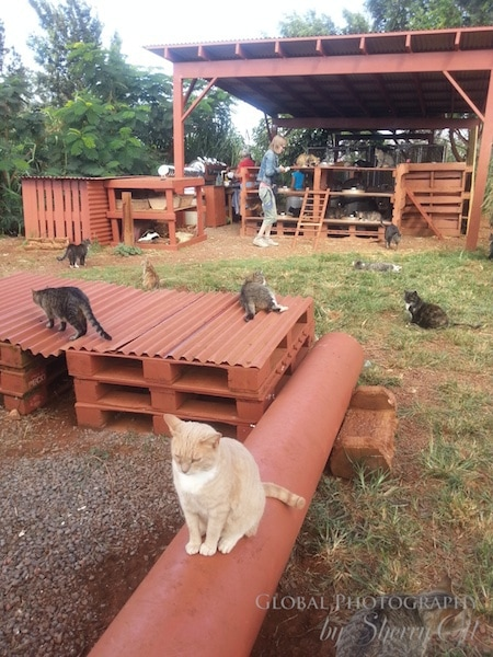 Cat playground at LARC