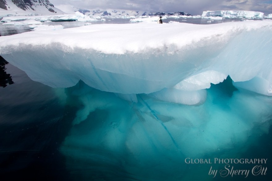 penguin resting on iceberg