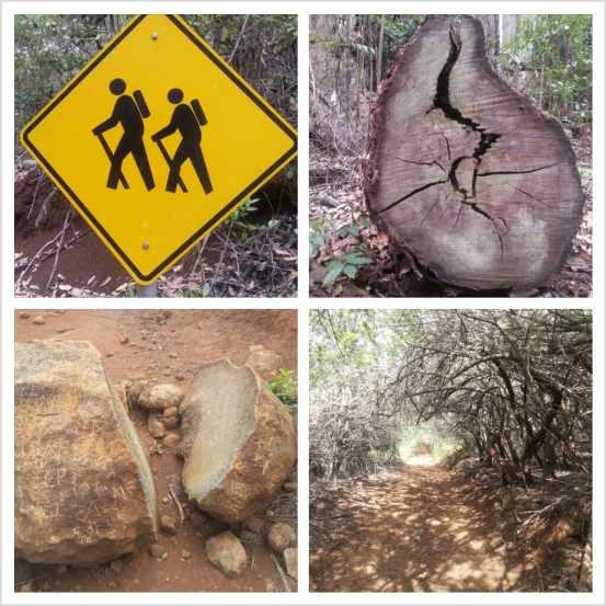 koloiki Ridge Trail