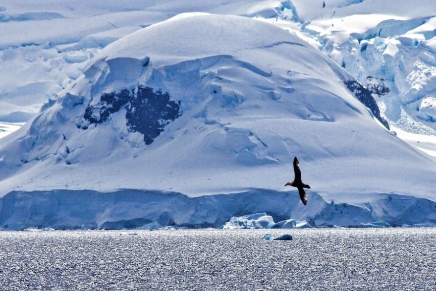A seabird glides around Antarctica