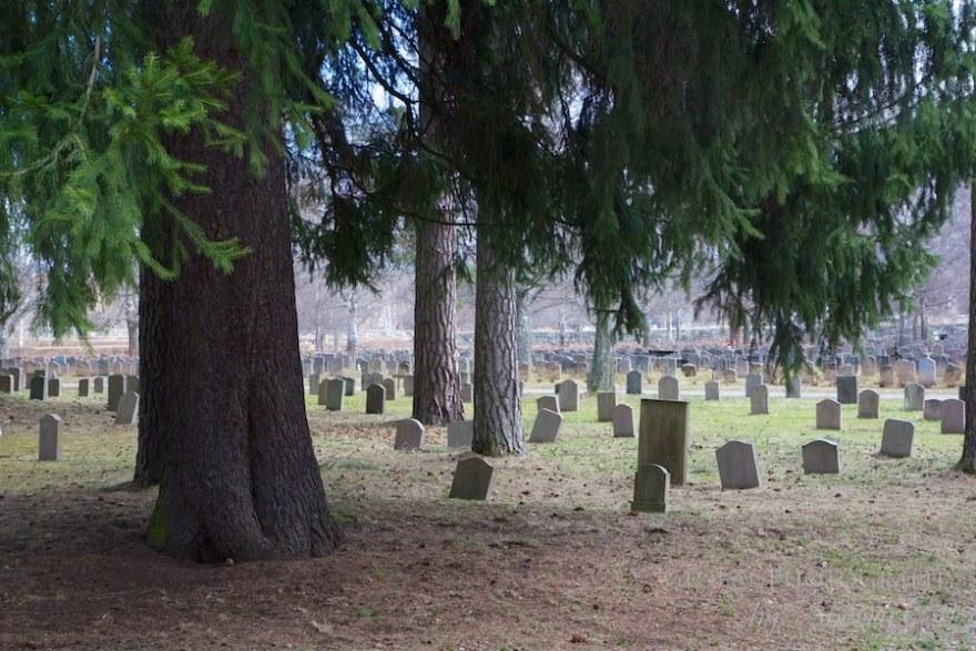 Skogskyrkogården  photos