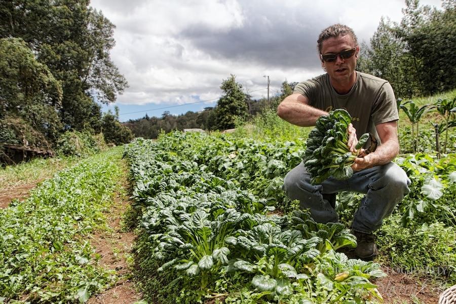 Farm To Table Maui Experience With Oo Farms