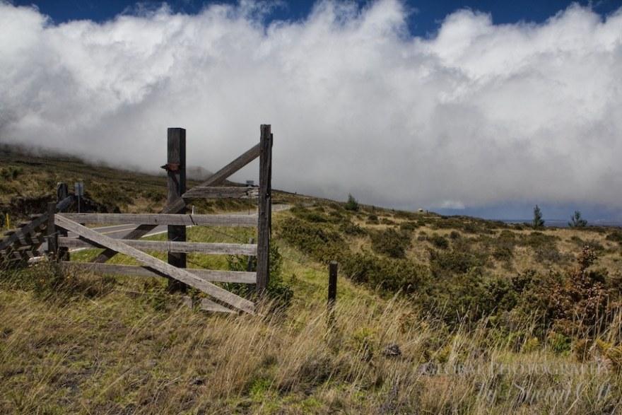 Biking Haleakala maui