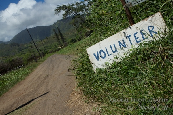 volunteer hawaii