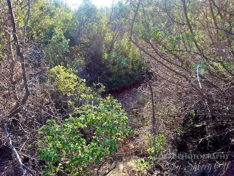 lycian way trail issues