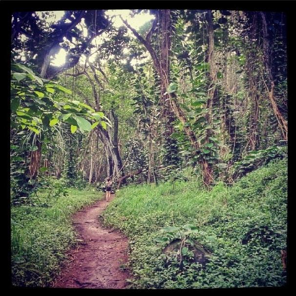 Hoopii trail kauai