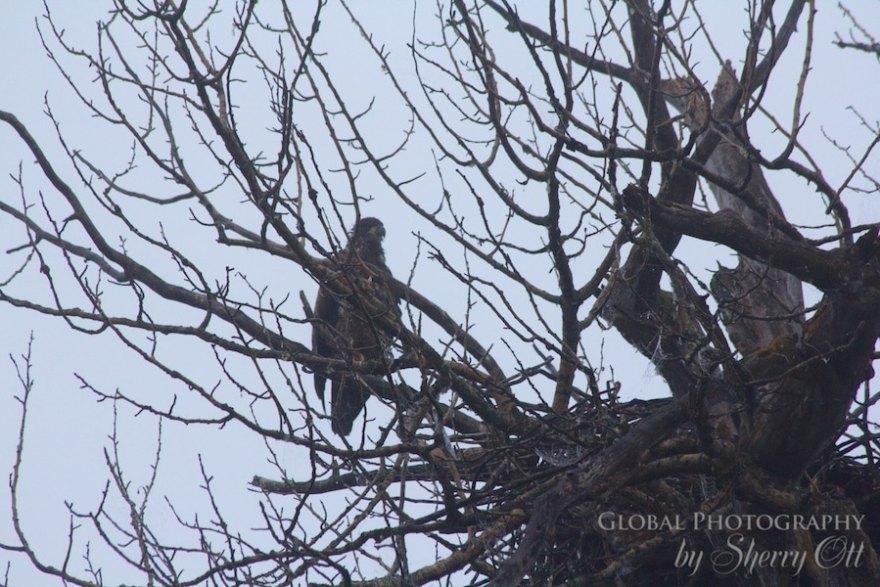 wetlands eagle golden bc
