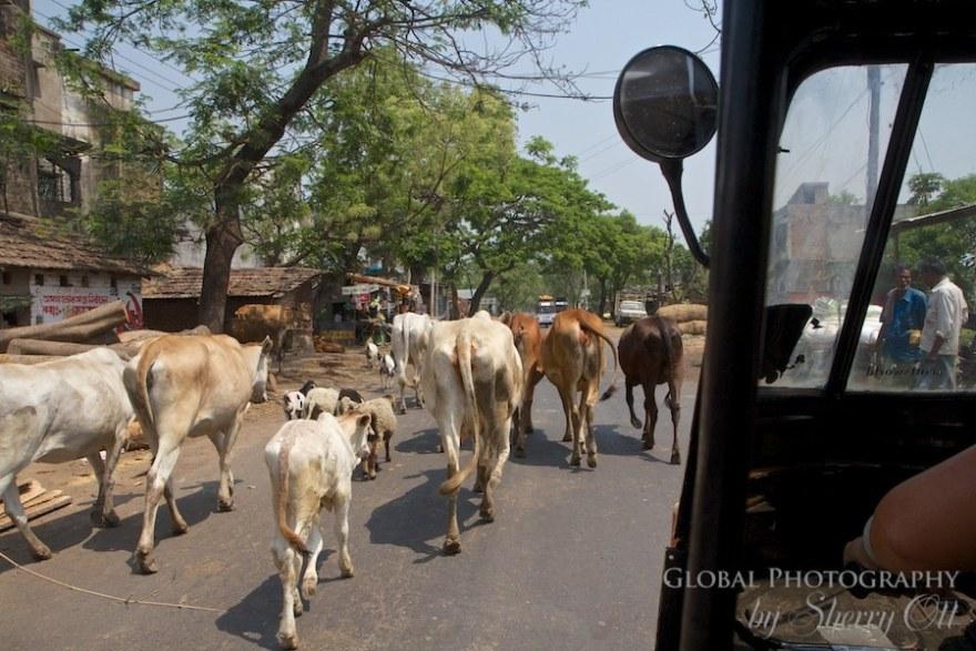 Rickshaw Run Window (7)