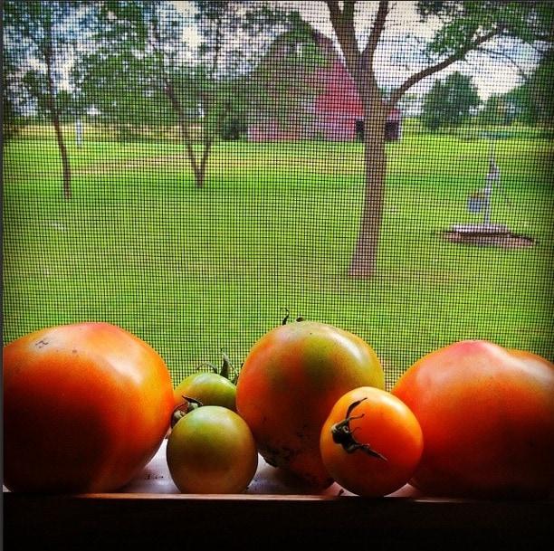 ripen tomatoes