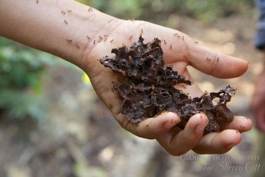 termites peru jungle