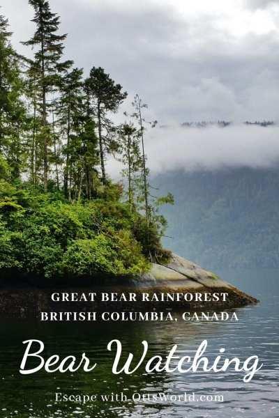 Bear Watching british columbia canada