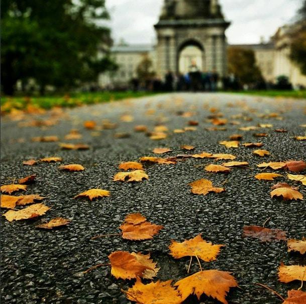 Trinity College Autumn Leaves