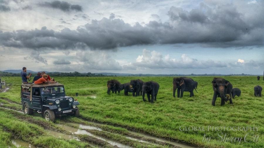 the Gathering elephant migration