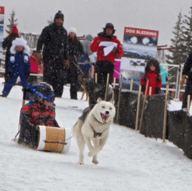Dog sled puppies alberta