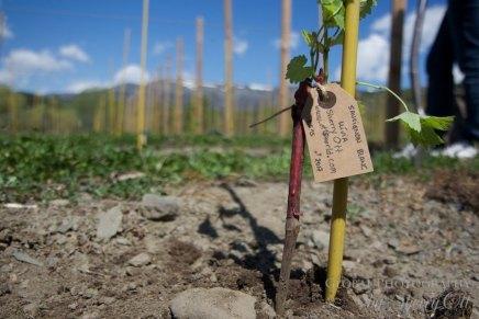 ice wine pyrenees