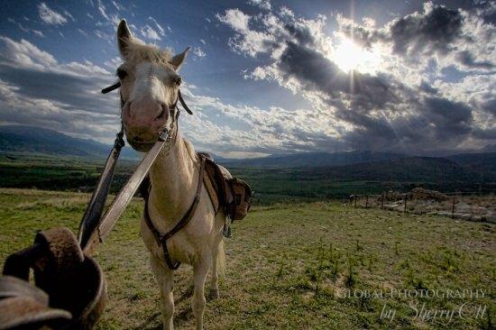 My horse!