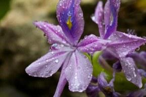 Jungle flowers
