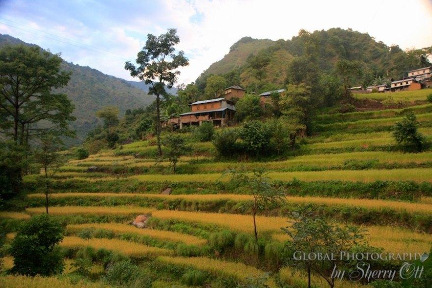 rice terraces october nepal