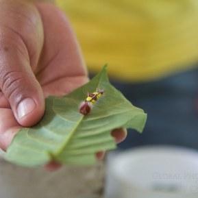 belize butterfly