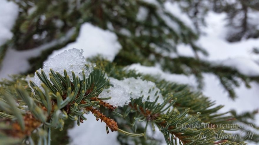 Snowshoeing Banff Alberta Canada