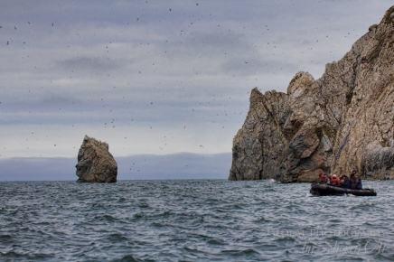 Bird Watching Herald Island Russia